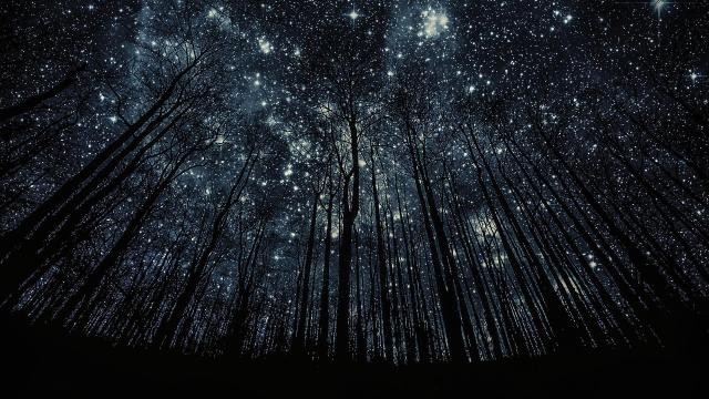 41811_photo_manipulation_forest_nigth_full_of_stars-2