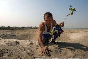 Jadav Molai Paleng The Forest Man