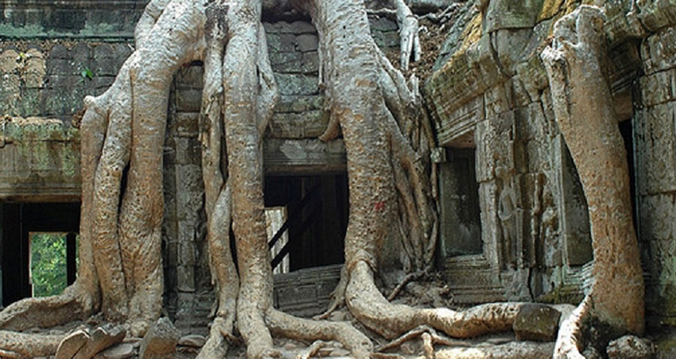 ta-prohm-1edit