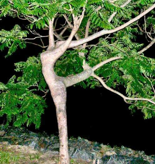 seeing the trees for the dryads non theistic nature worship by