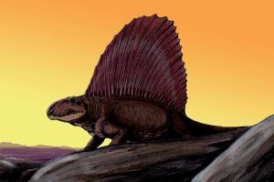 Dimetrodon8DB