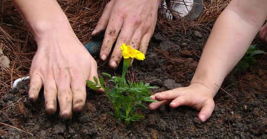 hands-planting_f_improf_550x287