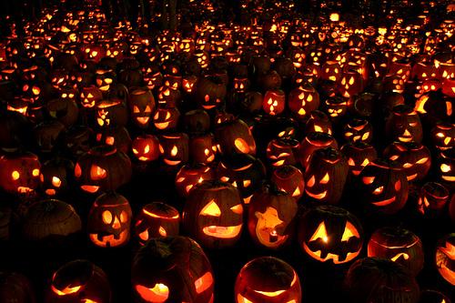 pumpkins-galore