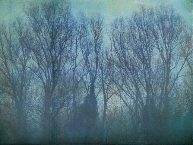 "Image Credit: ""Happy Winter Solstice"" by Caroline"