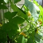 Garden RL