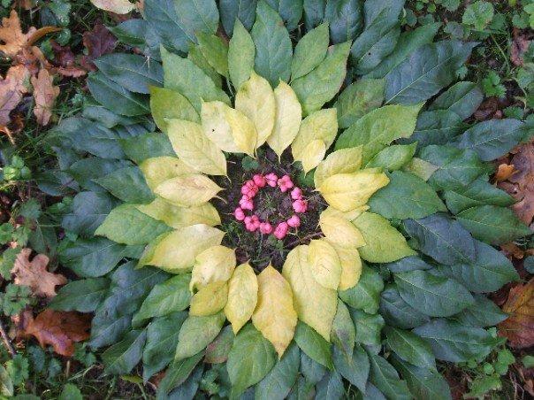 summer_leaf_mandala