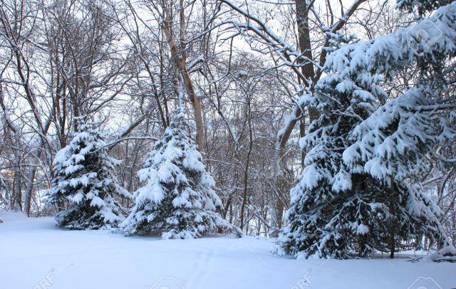 8354364-winter-snowscape-stock-photo
